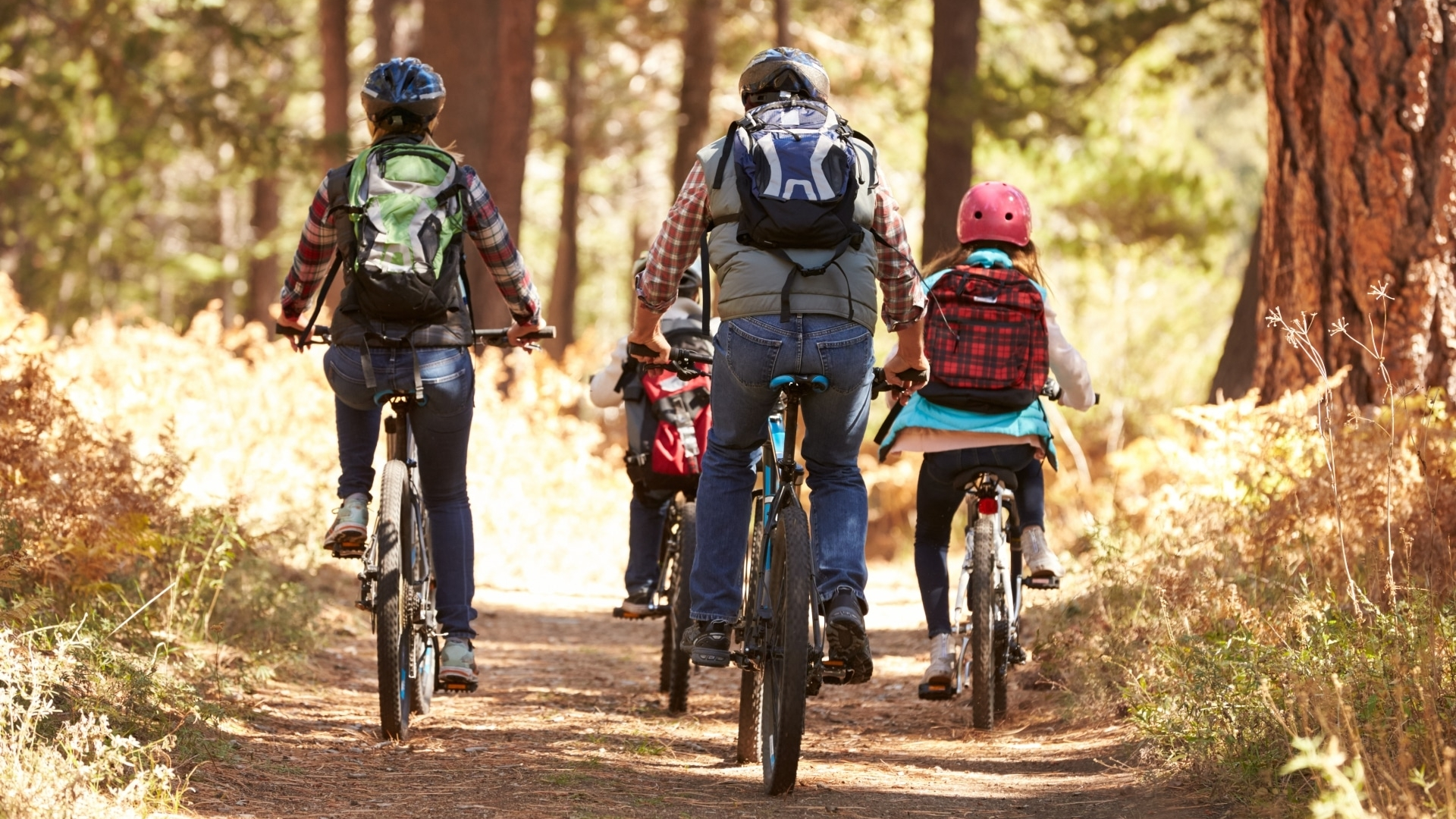 Family mountain biking on forest trail, back view © iStock