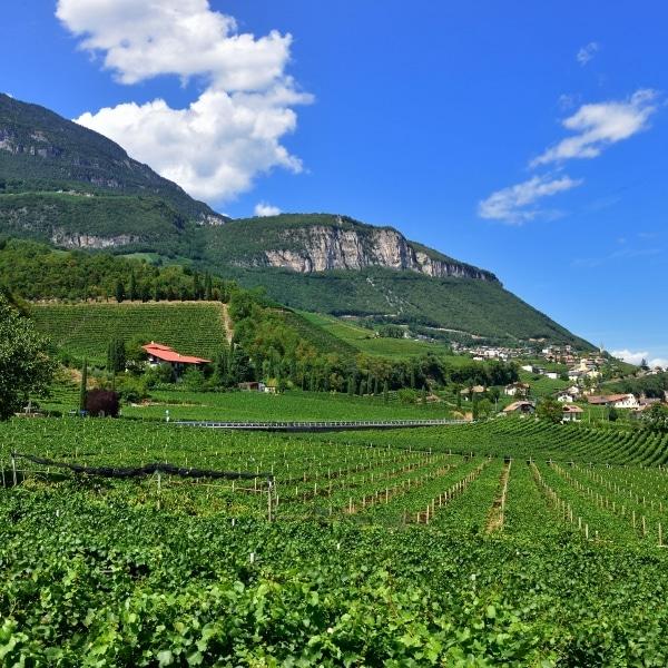 Weinberge © Südtiroler Unterland