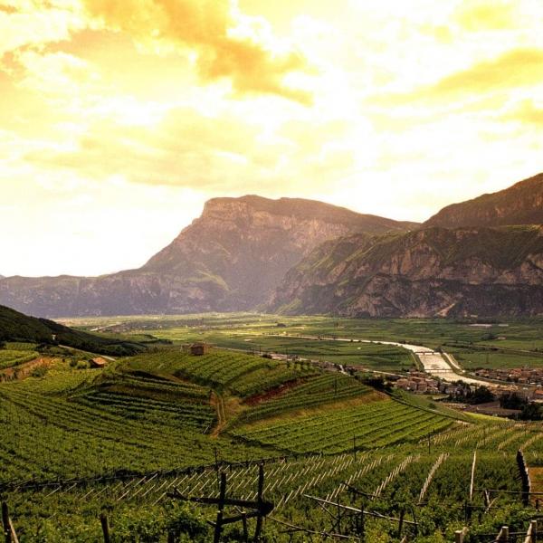 Weinberge im Etschtal © Fototeca Trentino Sviluppo S.p.A. Romano Magrone
