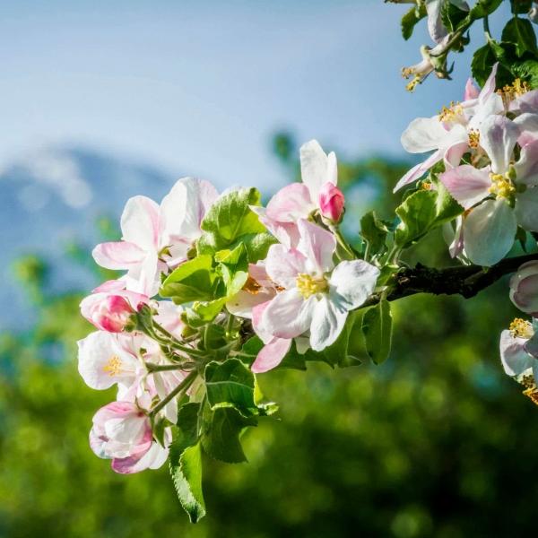 Bad Feilnbach am Fuße des Wendelsteins im Frühling © Chiemsee-Alpenland Tourismus - Thomas Kujat