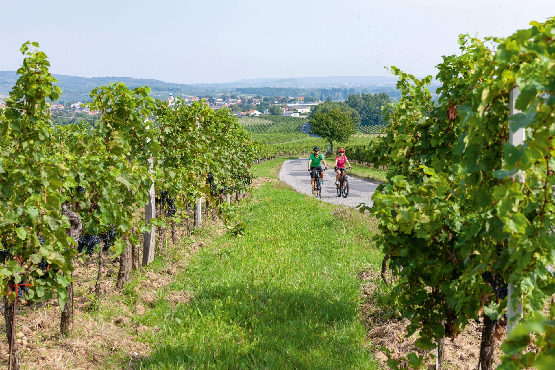 Rotwein © Burgenland Tourismus Daniel Simon