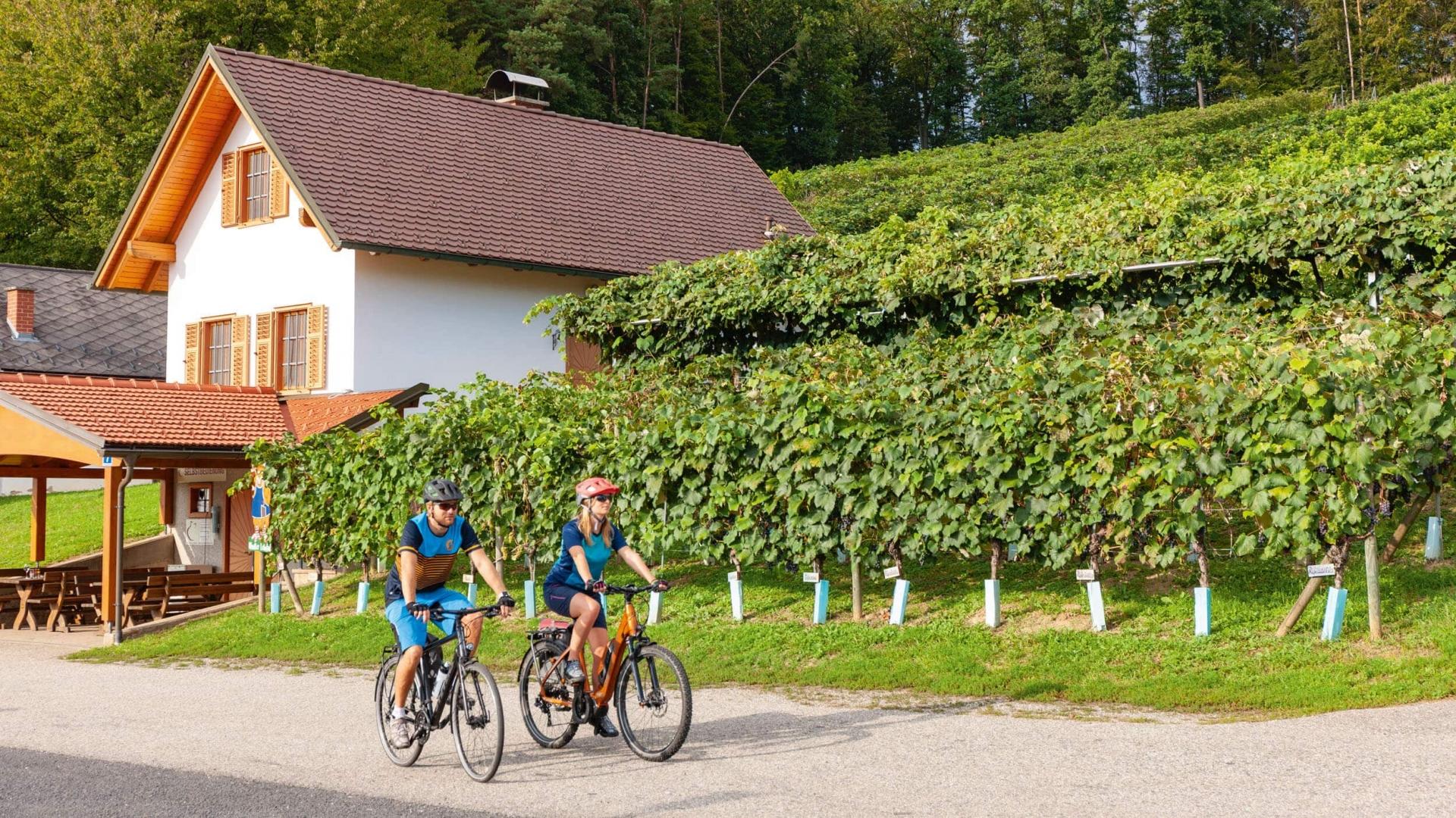 Uhudlerradweg © Burgenland Tourismus Daniel Simon