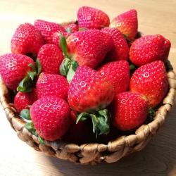 Erdbeeren © Rosalia Neufelder See