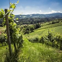 Weingärten von Hochgrail