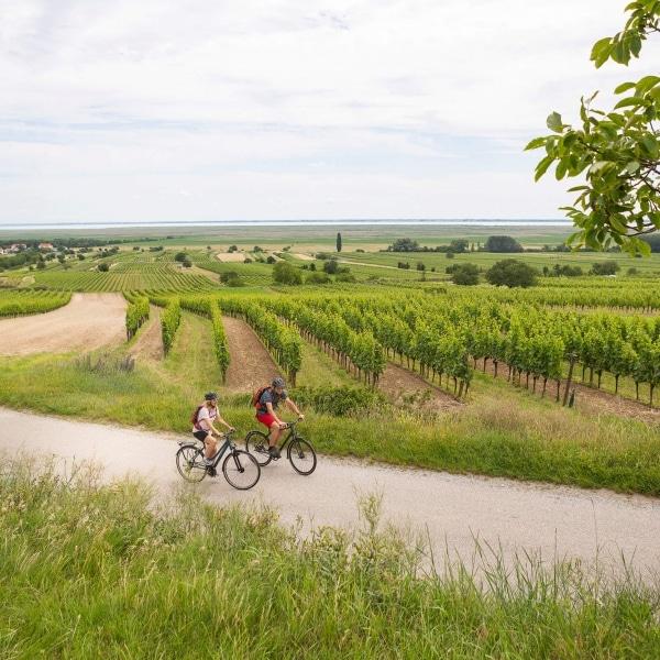 Fahrradtour durch die Weinberge im Burgenland © Velontour