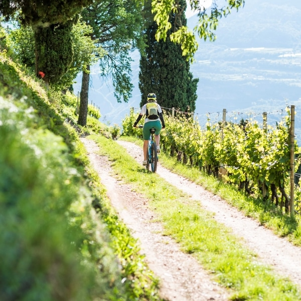 Bike Kastelaz Weinberge © TVTramin Antie Braito